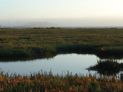 Photo of the Emeryville mudflats with San Francisco in the distance by Seaklause via Wikimedia Commons